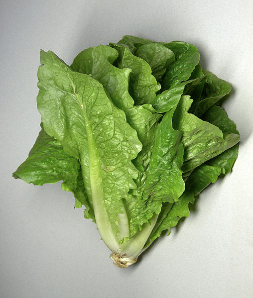 Picture of Romaine Lettuce on White Counter